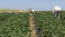 Climate Change Raises Risk For Outdoor Workers