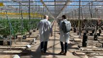 Why Conservative Snowflake Embraced A Massive Marijuana Farm