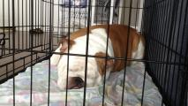 Pet Housing Task Force Prepares For Upcoming Evictions
