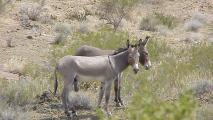 Wildish Covers Complex Treatment Of Wild Horses