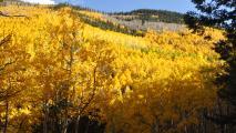 Arizona Forest Restoration Project Reaches Milestone