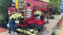 Poinsettia Sales Struggle To Bloom In Mexico During Pandemic