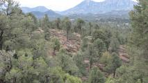 Most Of Tonto National Forest To Close To Reduce Wildfire Risk