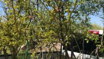 Group To Plant More Than 1,000 Trees This Weekend In Hermosillo