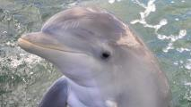TGen Dolphin Study Offers Clues To Human Aging