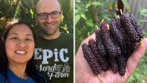 Arizona Mulberries: Debunking Mulberry Myths