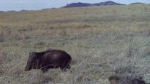Border Wildlife Study Needs Virtual Volunteers To Help Identify Species