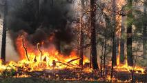 Professor Predicts Fire Age As Fire Season Stretches From Months To Most Of Year