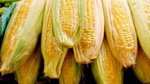 Are Biofuels Causing An Increase In Food Prices?