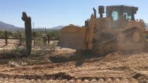 Video Shows Saguaro Bulldozed To Build The Border Wall