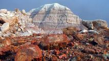 Petrified Forest National Park Begins Phased Reopening