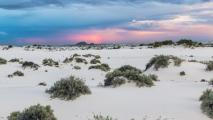White Sands footprints show human presence during N. America Ice Age