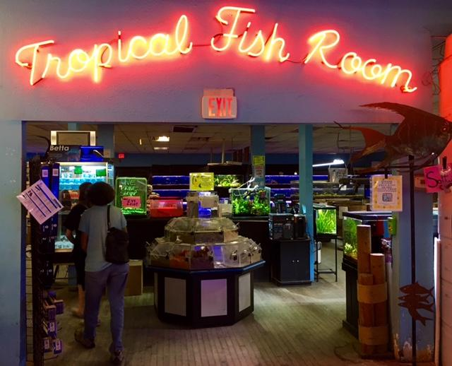 phoenix fish store refuses to fall for 39 finding dory