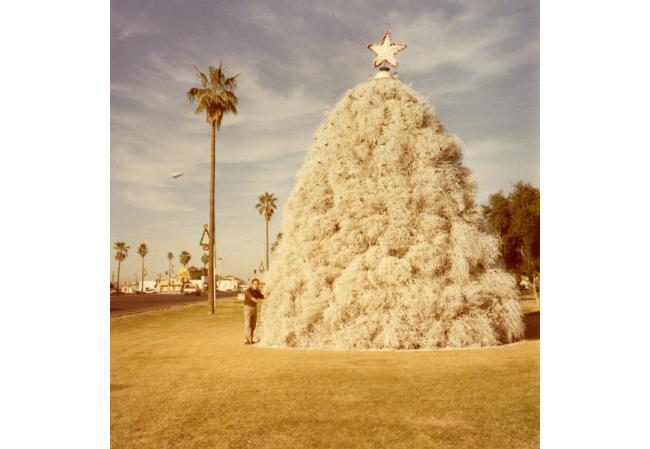 Did You Know: Chandler Tumbleweed Tree Is One Of A Kind | KJZZ