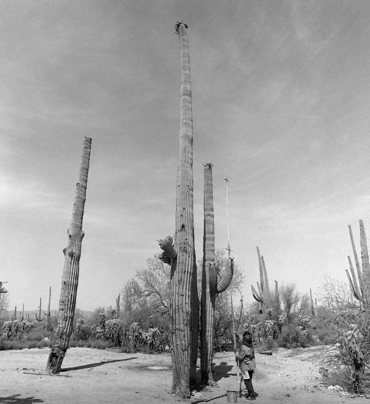 Helga Teiwes/Arizona State Museum