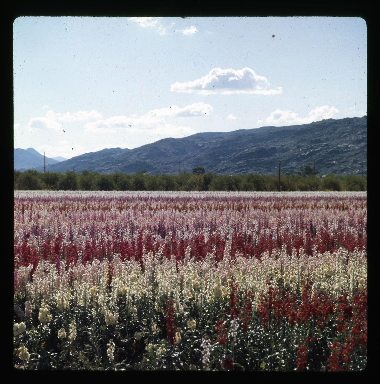 Herb & Dorothy McLaughlin Photograph Collection