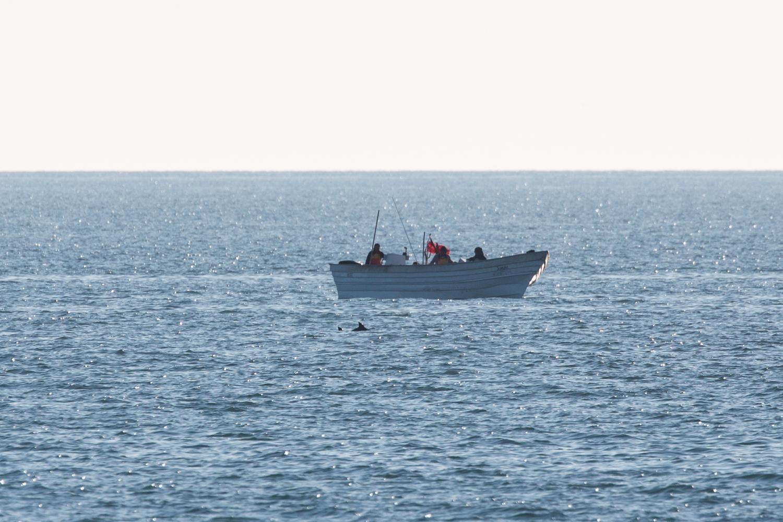 Courtesy of CONANP/Museo de la Ballena/Sea Shepherd