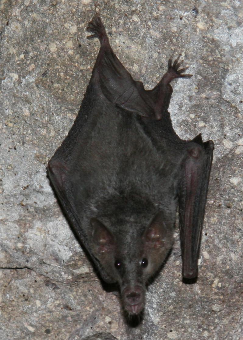 (Photo by Jason Corbett/Bat Conservation International)