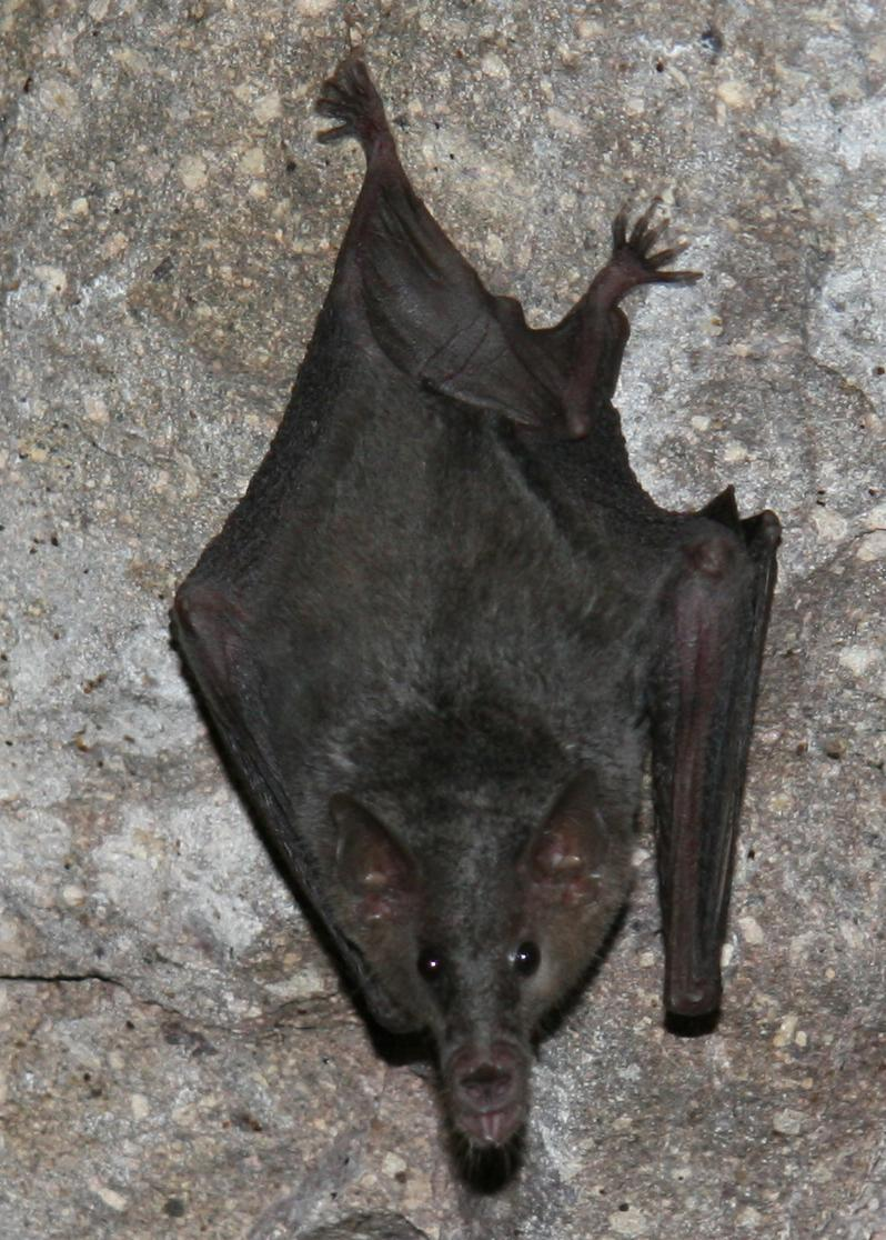 (Photo by Jason Corbett/Bat Conservation International)