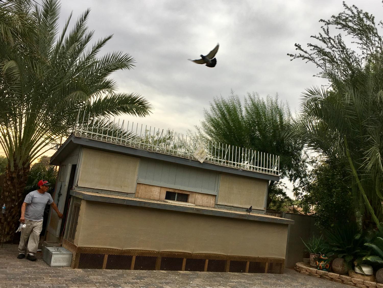 Homing Pigeons Are 'Like Family' For Pigeon Racer | KJZZ
