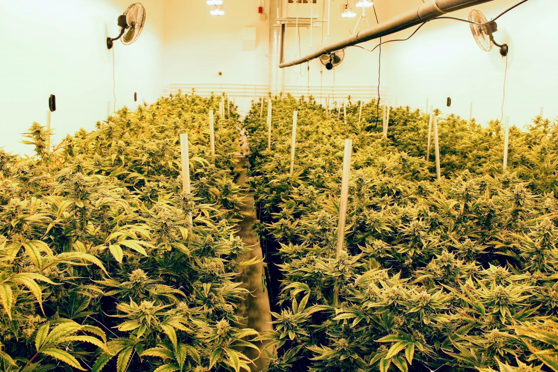 Q&AZ: How Does Federal Law Affect AZ's Medical Marijuana