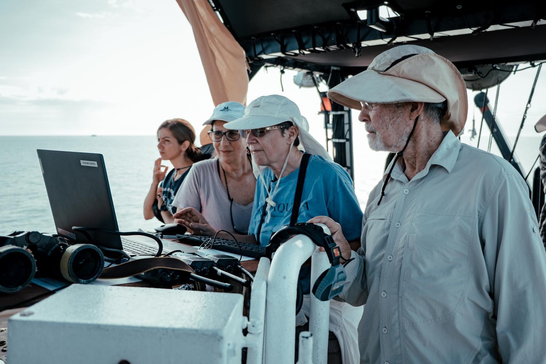Melissa Romao/Conanp/Sea Shepherd/Museo de la Ballena