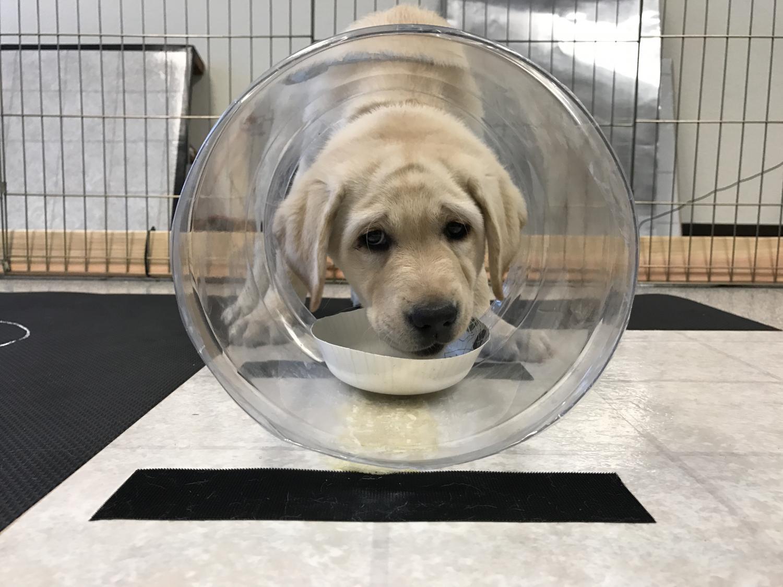 (Photos courtesy Arizona Canine Cognition Center - University of Arizona)