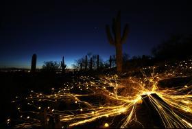 """""""Bruce Munro: Sonoran Light"""" exhibit"""