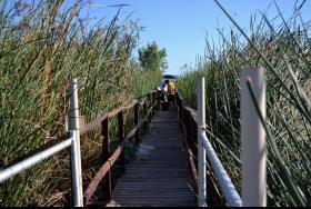 wetland researchers