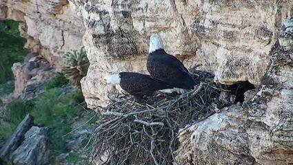 Prescott Forest Restrictions Aim To Help Bald Eagles