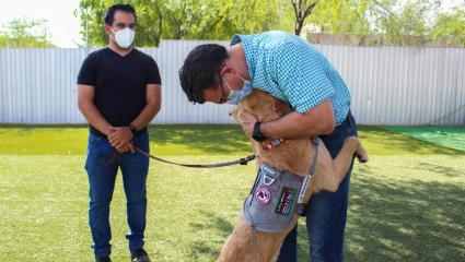 Detector Dogs Are Sniffing Out Cases Of COVID-19 In Sonora