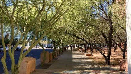 Phoenix Pledges Tree Equity For All Neighborhoods By 2030