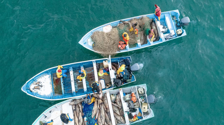 poachers in the Sea of Cortez