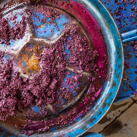 Grapes being smashed for wine