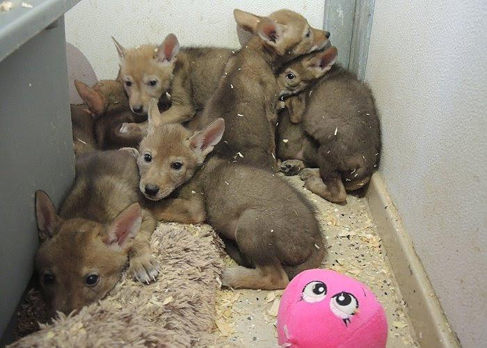 Southwest Wildlife Conservation Center baby animal