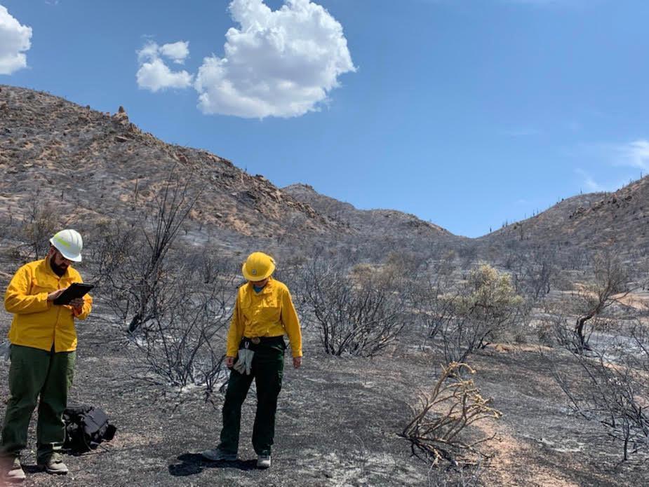 burn severity of the Woodbury Fire