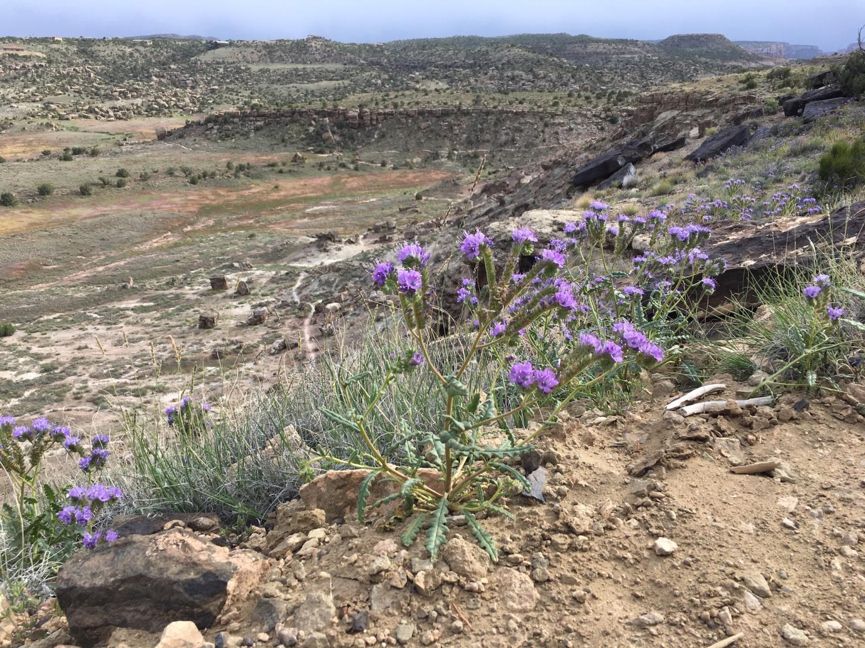 BLM land in Colorado