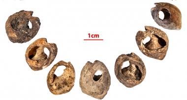 Thirty-three shell beads