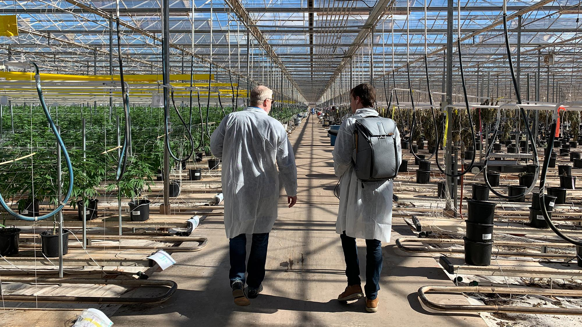 Copperstate Farms cannabis greenhouse