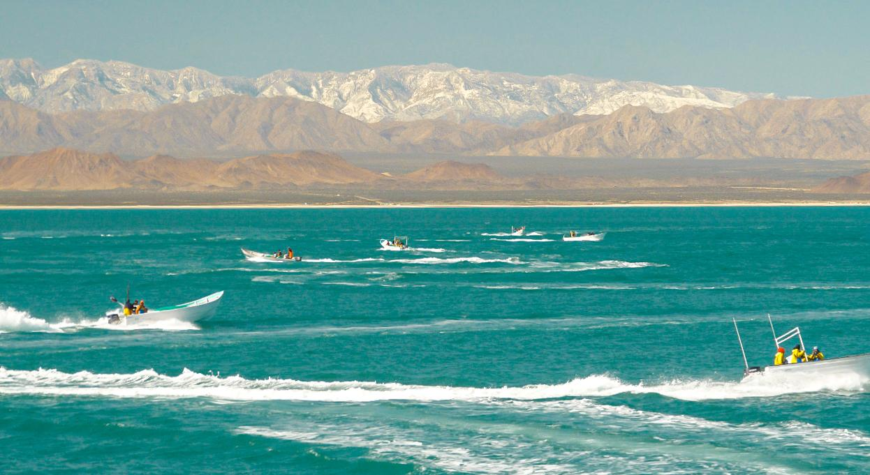 fishing boats in the vaquita refuge