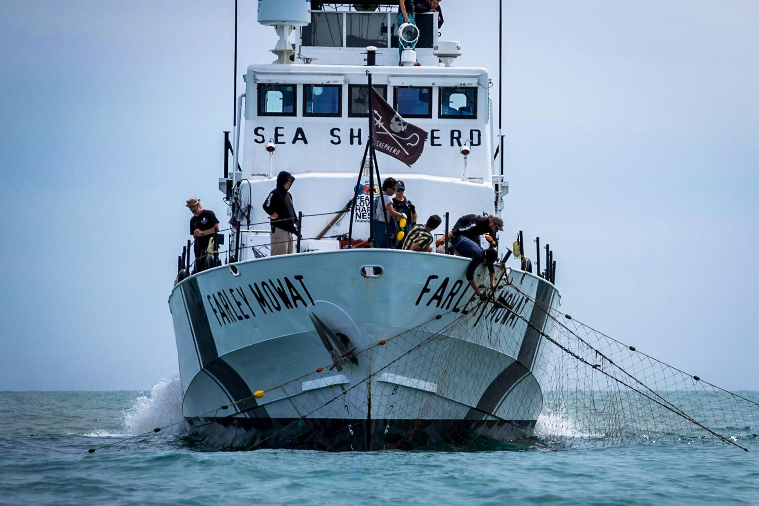 Sea Shepherd hauls in an illegal net
