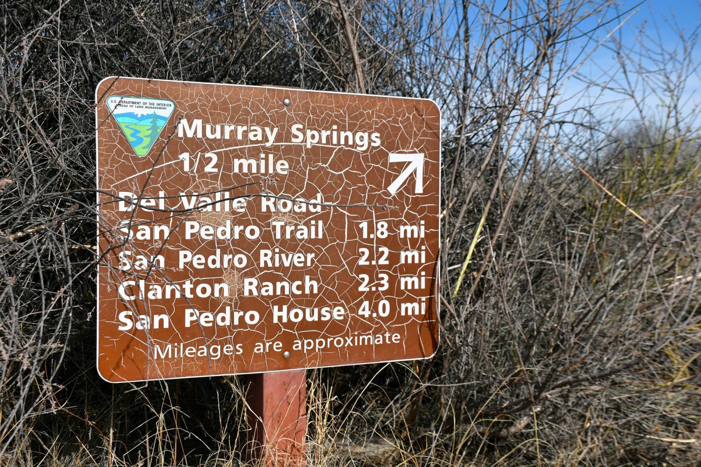 Murray Springs Trail