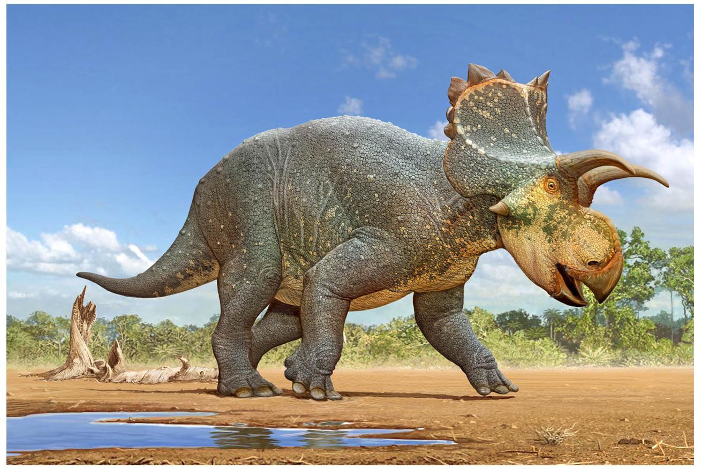 Crittendeceratops rendering