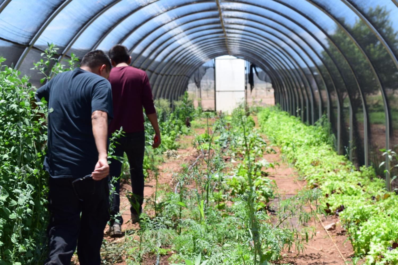 Ndee Bikiyaa crops