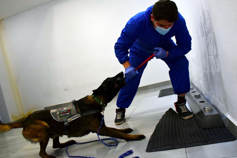 Dog handler with Harry