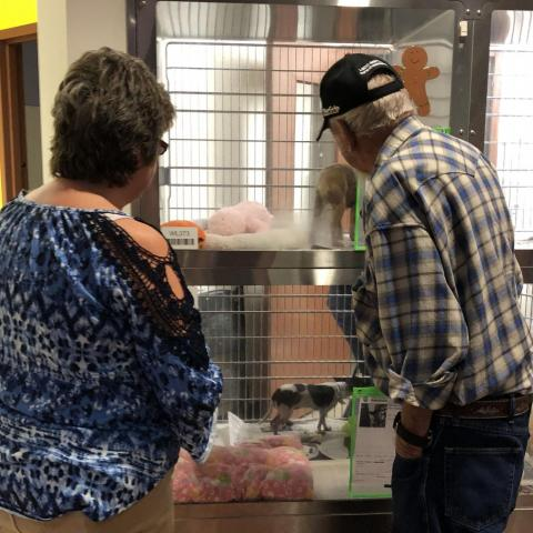 People look at pets available for adoption during the Empty The Shelters event at the Maricopa County Animal Care and Control Shelter, Nov. 30, 2019.