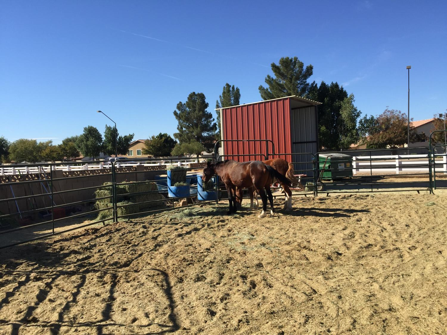 Wildhorse Ranch Rescue