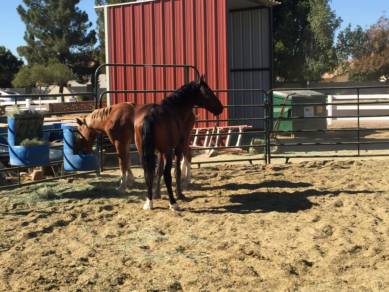Wildhorse Ranch Rescue
