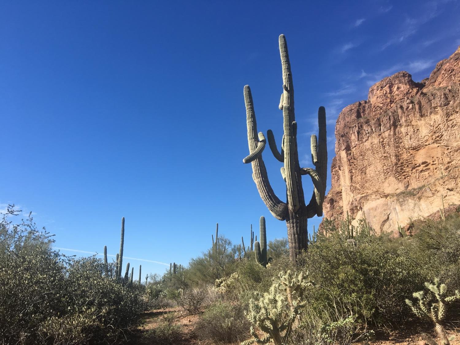 A saguaro cactus near the Superstition Mountains
