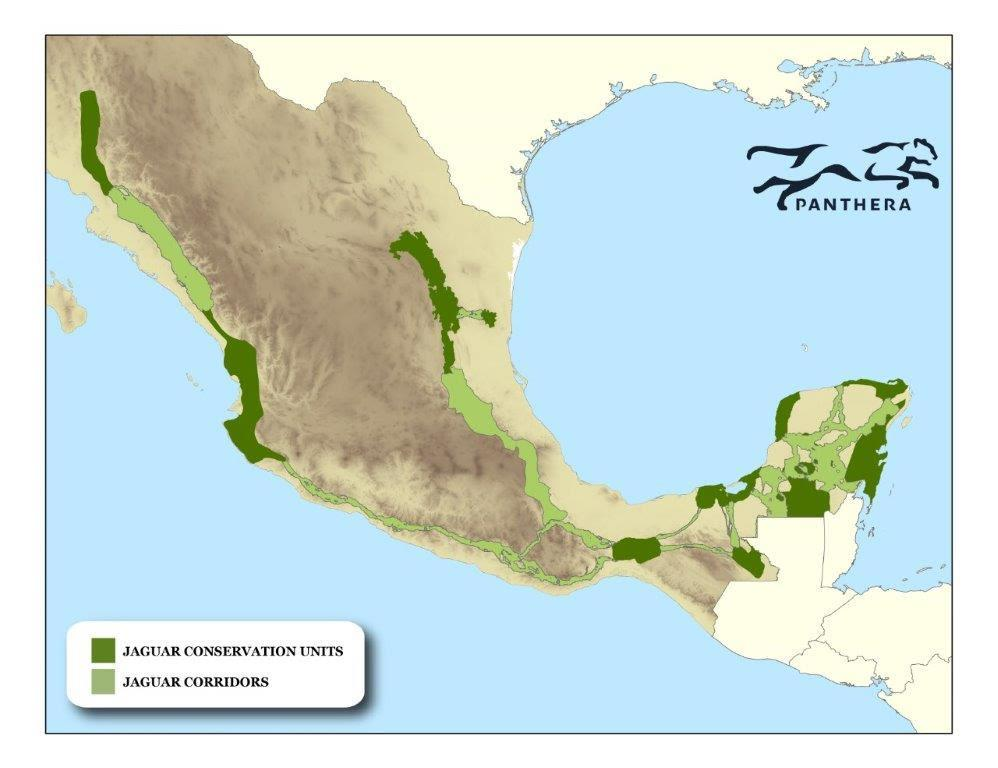 Map of jaguar populations